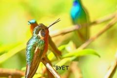 3-hummers-fb