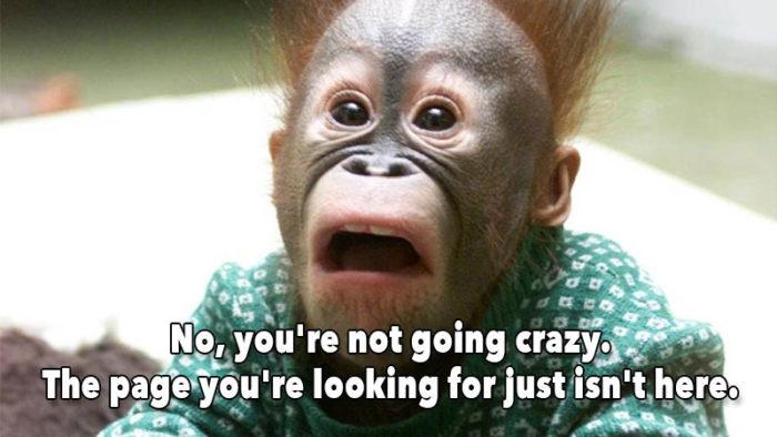 Shocked baby orangutan